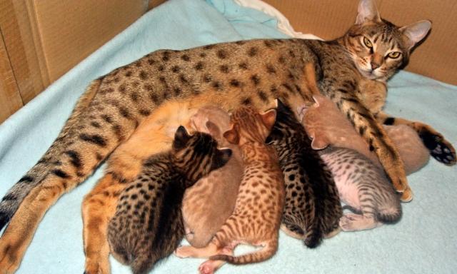 Ladys kittens